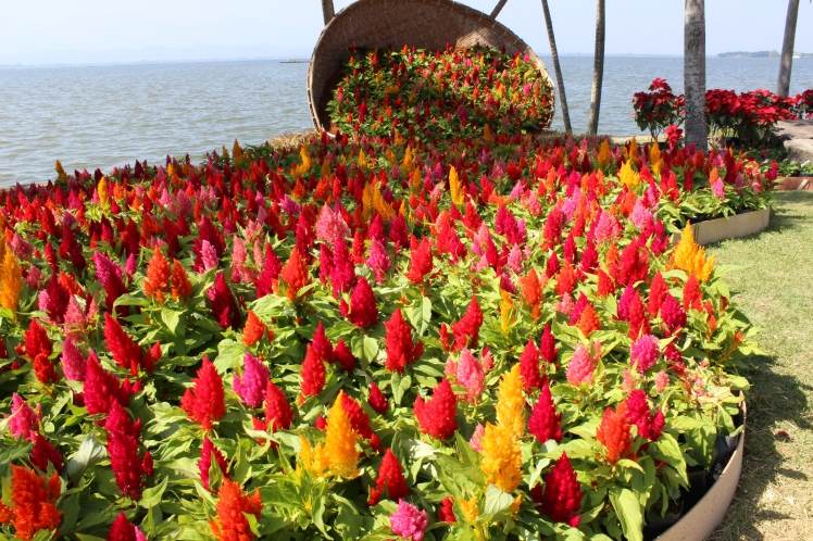 The annual Phayao Flower Festival, over Christmas.